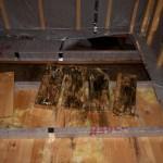 гниет пол в деревянном доме