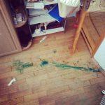 чем оттереть зеленку с линолеума