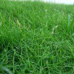 ковролин зеленый