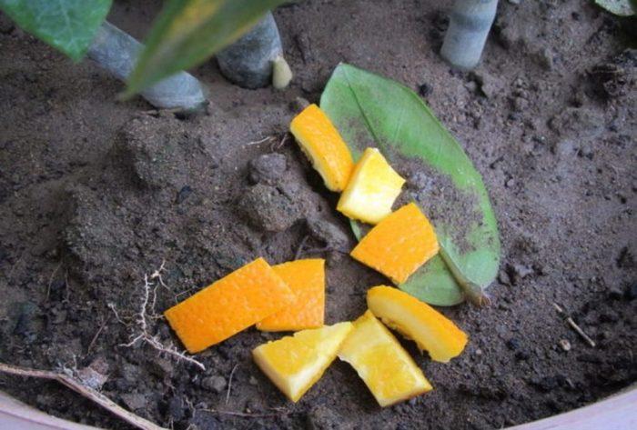 апельсиновые корки для огорода