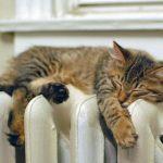 Когда можно не оплачивать отопление в квартире