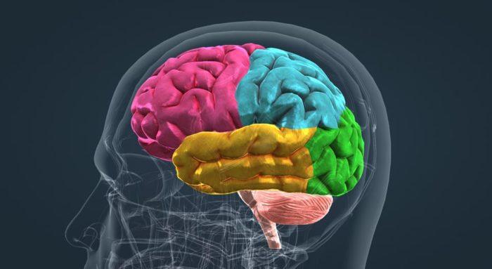 Чем надо радовать мозг каждый день