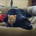 Новые правила содержания домашних животных