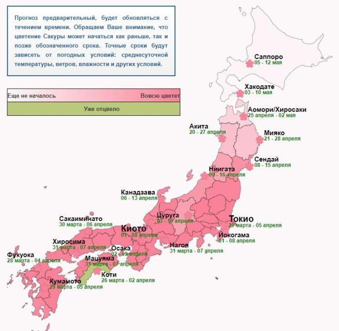 Таблица цветения сакуры в Японии