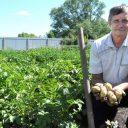 Вредные мифы о выращивании картофеля, в которые верит большинство
