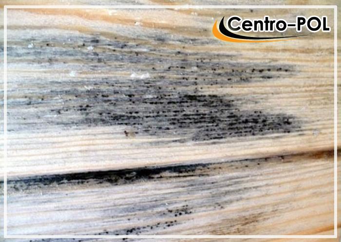 Пример гниения доски в виде проявления черной плесени