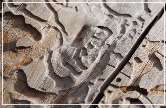 покрытие доски террасной из лиственницы